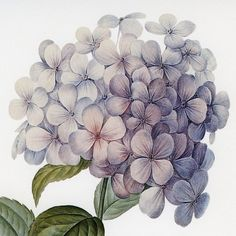 State: Massachusetts Artist: Zhee Singer Title: Vintage Botanical #18 Product type: Framed and matted Giclee fine art print Style: Traditional Format: Square Subject: Floral Image dimensions: 9.5 inch
