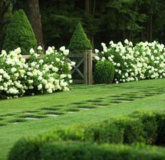 This image has made me a total believer in the talent of JANICE PARKER LANDSCAPE DESIGN. Unfortunately she is far away -- CT to be exact. So much to admire: that simple and natural gate as focal point surrounded by conical shapes and then miles of loose hydrangeas. A riot of shape/texture. Notice too the beckoning stone path leading through the grass.