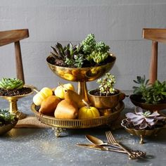 Brass accents set off pears and succulents in this pretty Thanksgiving centerpiece. Details + more ideas for centerpieces: http://www.midwestliving.com/homes/seasonal-decorating/holiday-ideas/easy-thanksgiving-centerpieces/page/8/0