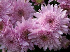 fav purple flowers