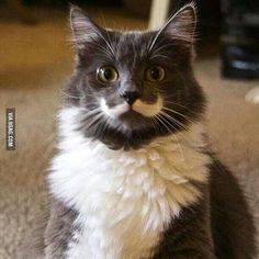 I really need to own a pet that has a fur-stache. Also, fur eyebrows.