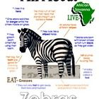 "This ""All About Book"" will be a fun addition to your classroom and lesson on the zebra. (African Animals Unit Study) Your student/child will love to learn ""All About Zebras""!"