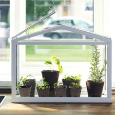 Plants and flowers are an easy way to add a pop of color to any drab dorm room. Try the SOCKER greenhouse to create a beautiful, little garden on your windowsill.