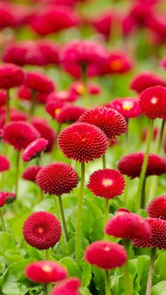 Flower Red Green Spring Bokeh Nature #iPhone #6 #plus #wallpaper