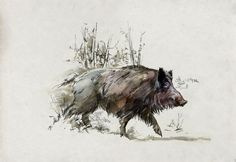 Drawing of a wild boar © Benoit Clarys pour le Musée Luxembourg Wild Boar Hunting, Pig Hunting, Hunting Art, Animal Sketches, Animal Drawings, Hog Dog, Natur Tattoos, Satanic Art, Muse Art