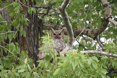 Whoo can see me? Birds, Canning, Photography, Animals, Photograph, Animales, Animaux, Fotografie, Bird