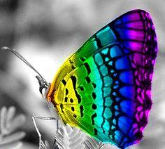 Rainbow butterfly color splash