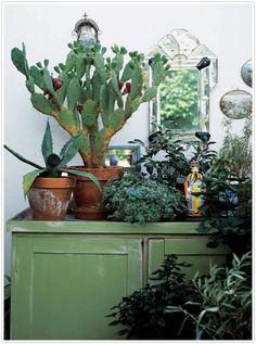 Indoor plants, cactus, and house plants. All the green and growing potted plants. Foliage and botanical design Cacti And Succulents, Planting Succulents, Garden Plants, Indoor Plants, Planting Flowers, Leafy Plants, Indoor Gardening, Indoor Cactus, Potted Plants