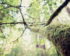 Mossy Tree Photograph, Woodland Forest Home Decor, Spooky, Mysterious, Green Wall Decor, 8x10