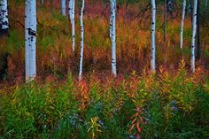 """https://flic.kr/p/akPrvi 