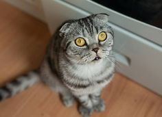 http://www.petmd.com/cat/behavior/why-do-cats-spray?utm_source=AndMyCat