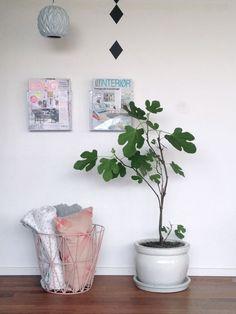Figentræ-boligblog.com
