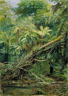 View under the Ferns at Gongo, Brazil, Marianne North