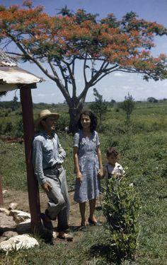1940's A farming family poses in yard near blooming royal poinciana tree.Near Cienfuegos, Cuba.//MELVILLE B. GROSVENOR/National Geographic Creative