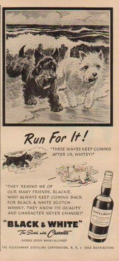 Vintage B & W Scotch ad