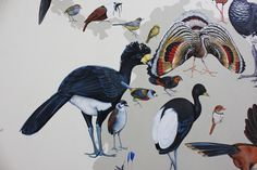 The artist recently completed a 70-by-40-foot work depicting all 243 modern bird families — to scale — for the Cornell Lab of Ornithology.