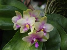 Phal Hew Choy Sin x Phal Dunman High  Photo:  This Photo was uploaded by woollymammothphotos.
