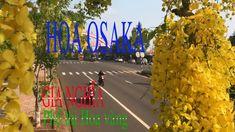 Hoa Osaka | Gia Nghĩa phố thị hoa vàng Link Youtube, Fair Grounds, Travel, Viajes, Destinations, Traveling, Trips