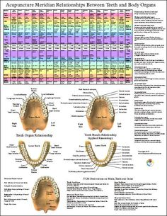 Google Image Result for http://www.dcfirst.com/new2010/AcupunctureDentalPoster17x22.jpg