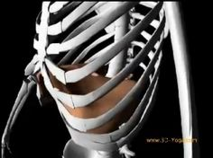 For all you yoga geeks out there - 3D video of diaphragmatic breathing during yoga.