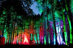 Pictures taken from The Electric Forest.