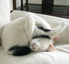 Holy Cat! He is very limber!
