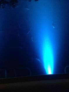 How LED lights attract bait fish at night, and which colors work best. #fishing #bass