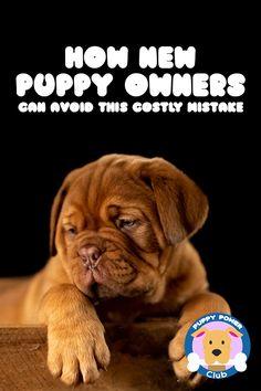 dog hacks,dog tips,dog learning,dog care,dog stuff Puppy Obedience Training, Puppy Training Tips, Training Your Dog, Dog Whisperer, Easiest Dogs To Train, Dog Training Techniques, Dog Hacks, New Puppy, Dog Care