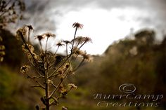 Nature Photography Drying Flowers  13x19 Inch by BurrCampCreations, $35.00