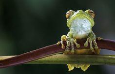 This guy likes it in Costa Rica, too!!    © Piotr Naskrecki/ iLCP