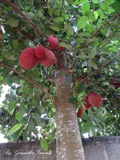 Look like a jack fruit. Fruit Trees In Containers, Fruit Plants, Fruit Garden, Weird Trees, Fruits Photos, Strange Fruit, Fruit Benefits, Growing Gardens, Fruit Seeds