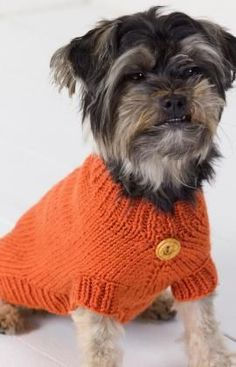 Lots of doggie sizes available for this pattern. Possibly a Christmas present for Precious?