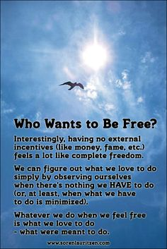 Quote with picture by Soren Lauritzen: Feel free. Do what you love. Bird. Sun. Sky.