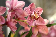 10 Important Things to Consider When Planning Your Landscape Design Flower Images Hd, Flower Pictures, Moth Orchid, Orchid Plants, Cymbidium Orchids, Purple Orchids, Summer Flowers, Beautiful Flowers, Monkey Orchid