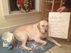 Here are seven photos of dogs, cats, and other family pets caught in the act of naughty deeds, with a human-written description of the infraction. Bad dog! Bad cat!