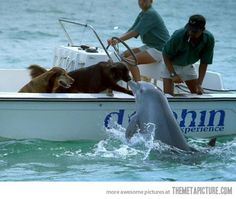Even dogs enjoy seeing dolphins in the wild! The way nature intended!!!