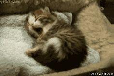 Soft kitty, warm kitty, little ball of fur ~   {BBT Fans will understand} :-D