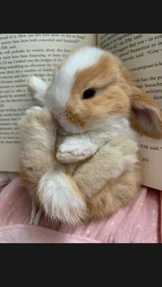 Cute Wild Animals, Baby Animals Super Cute, Cute Little Animals, Cute Funny Animals, Animals Beautiful, Cute Cats, Cutest Animals, Cute Bunny Pictures, Baby Animals Pictures