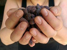 Cacao beans dried under the Madagascar sun. #Madagascar #trinitario #cacao #cacaotree #adventuresinmadagascar #ambajan Cacao Beans, Madagascar, Blueberry, Cooking Recipes, Sun, Fruit, Food, Berry, Chef Recipes