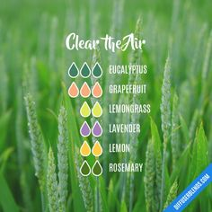 Clear the Air - Essential Oil Diffuser Blend