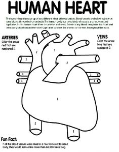 Free Human Heart Coloring Page From Crayola For Body System Studies