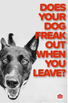 If your dog gets anxious or excited when you leave the house, it could be a sign of separation anxiety in your dog.