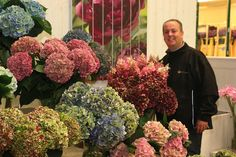 #Hydrangea #Hortensia #AutumnColors; Available at www.barendsen.nl