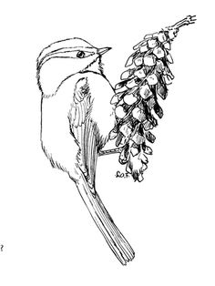 Click to see printable version of Mountain Chickadee coloring page