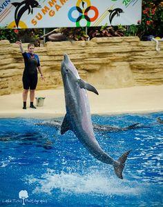 Brookfield Zoo dolphin show