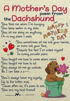 The Diverse Dachshund Breed - Champion Dogs Dachshund Funny, Dachshund Breed, Dachshund Art, Long Haired Dachshund, Daschund, Funny Dogs, Doxie Puppies, Best Apartment Dogs, Mothers Day Poems