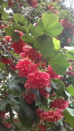 Red flowers, Madeira