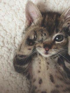 Cat Saturday (24 Photos)