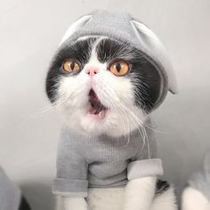 Funny Cat Costume Rabbit Style Pet Hooded Winter Clothes For Dogs Halloween Christmas Suit For Cats Gifts For Pet Lovers, Cat Gifts, Cat Lovers, Portraits From Photos, Pet Portraits, Dog Halloween, Halloween Christmas, Christmas Suit, Cheap Pets