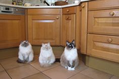 Daisey, Bijoux and Boogie wating for dinner
